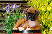 PUP 37 CE0005 01