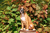 PUP 37 CE0006 01