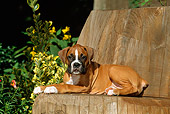 PUP 37 CE0007 01
