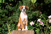 PUP 37 CE0010 01