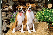 PUP 37 CE0013 01