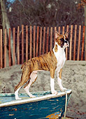 PUP 37 CE0014 01