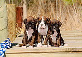 PUP 37 CE0016 01