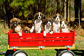 PUP 37 CE0017 01