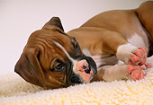 PUP 37 DC0019 01