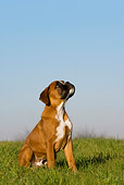 PUP 37 KH0005 01