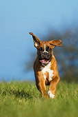 PUP 37 KH0007 01