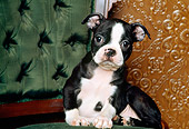 PUP 37 RK0002 05