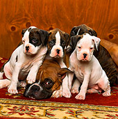 PUP 37 RK0003 02