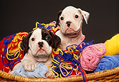PUP 37 RK0005 04