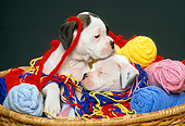 PUP 37 RK0005 13