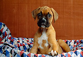 PUP 37 RK0019 02