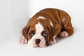 PUP 37 RK0071 01