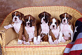 PUP 37 RK0075 05