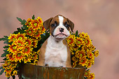 PUP 37 RK0079 01