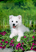 PUP 38 FA0005 01