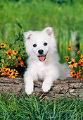 PUP 38 FA0006 01