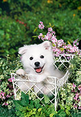 PUP 38 FA0007 01