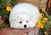 PUP 38 CE0002 01