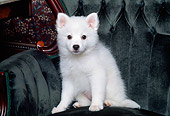 PUP 38 RK0013 01