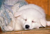 PUP 38 RK0014 02