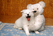 PUP 38 RK0022 02