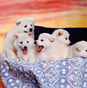 PUP 38 RK0034 03