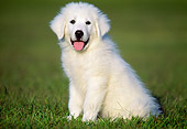 PUP 39 GR0002 01