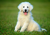 PUP 39 GR0004 01