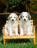 PUP 39 CE0003 01