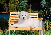 PUP 39 CE0004 01