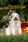 PUP 39 CE0005 01