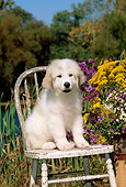 PUP 39 CE0006 01