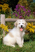 PUP 39 CE0007 01