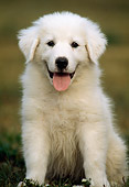 PUP 39 GR0001 06