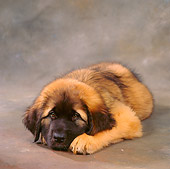 PUP 40 RS0007 01