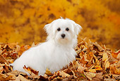 PUP 41 PE0002 01