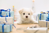 PUP 41 YT0001 01