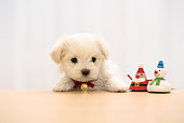 PUP 41 YT0002 01
