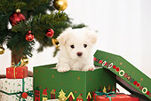 PUP 41 YT0003 01