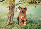 PUP 42 AB0001 01