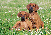 PUP 42 CB0002 01