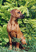 PUP 42 CB0006 01