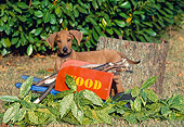 PUP 42 CE0005 01
