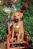 PUP 42 CE0006 01