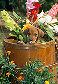 PUP 42 CE0007 01