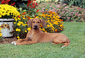PUP 42 CE0009 01