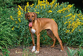 PUP 42 CE0011 01