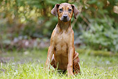 PUP 42 JE0001 01