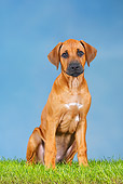 PUP 42 PE0002 01
